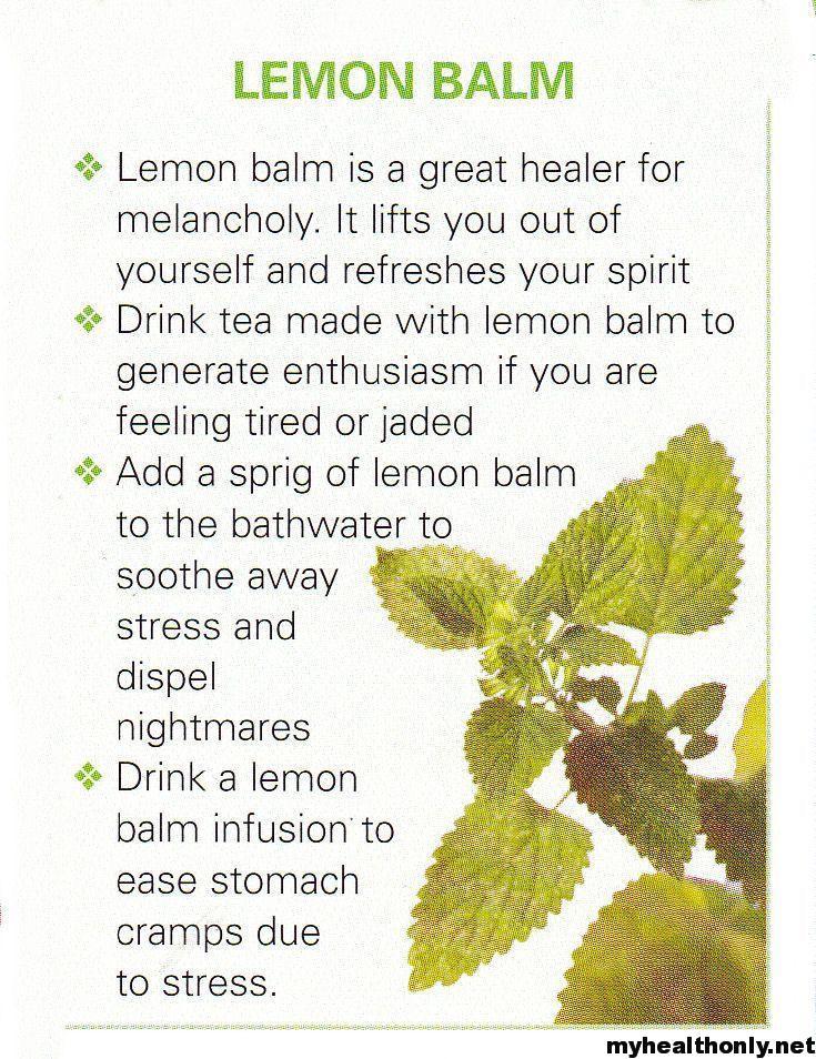 Lemon Balm Benefits